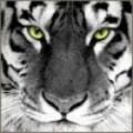 Renzo66 avatar