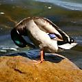 Ducky4Lovey avatar