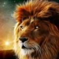 leonfxl3000 avatar